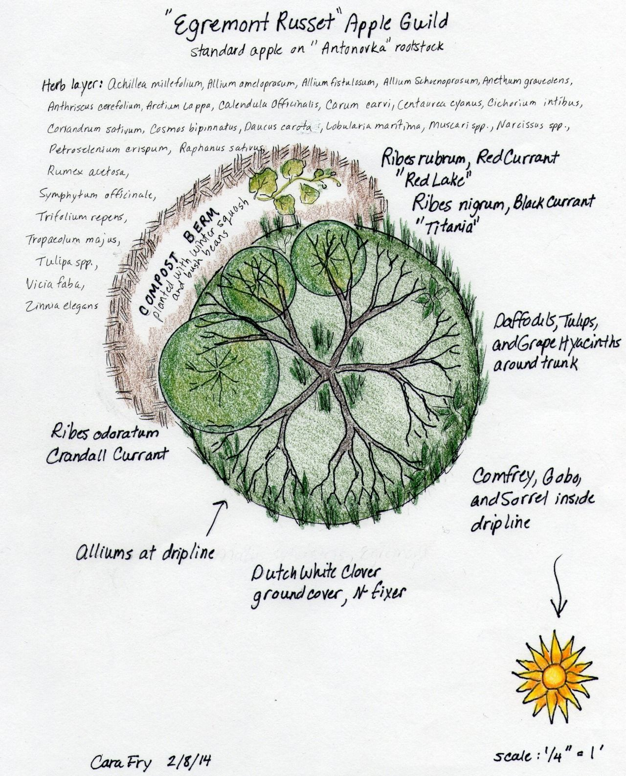 hight resolution of  egremont russet apple tree guild designed by c fry the egremont russet apple guild is the northernmost of the three we are planting this year