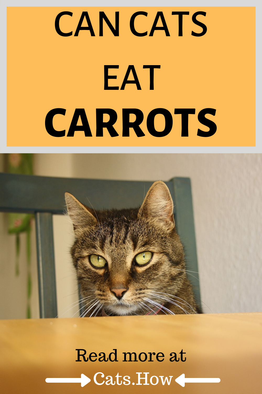 Can Cats Eat Carrots In 2020 Best Cat Food Cat Nutrition Healthy Cat Food