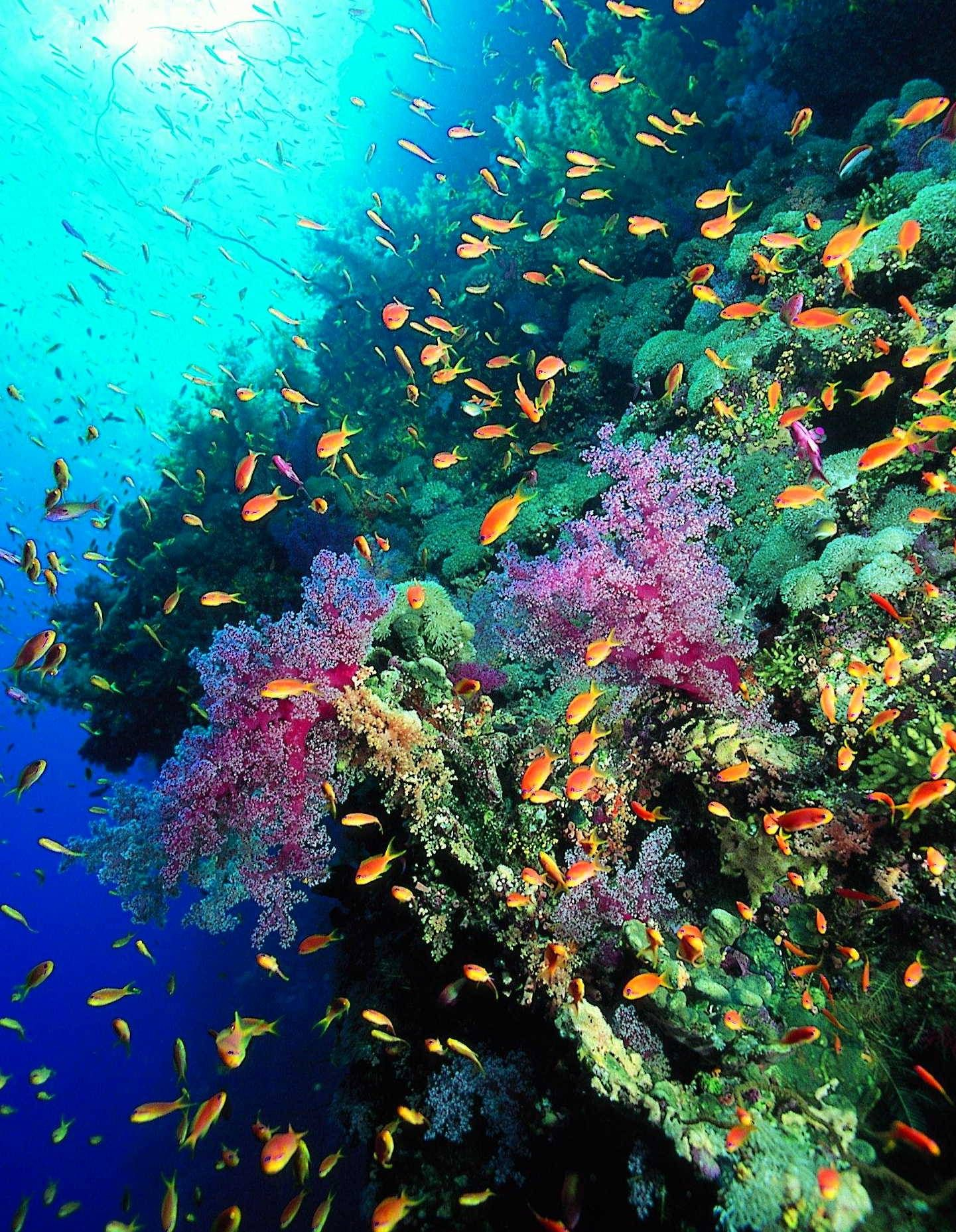 Beautiful scene of fish coral sponges and sea for Reef tropical fish