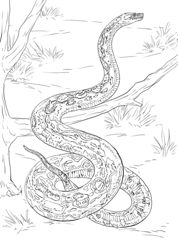 Realistic Boa Constrictor Coloring Page Coloring