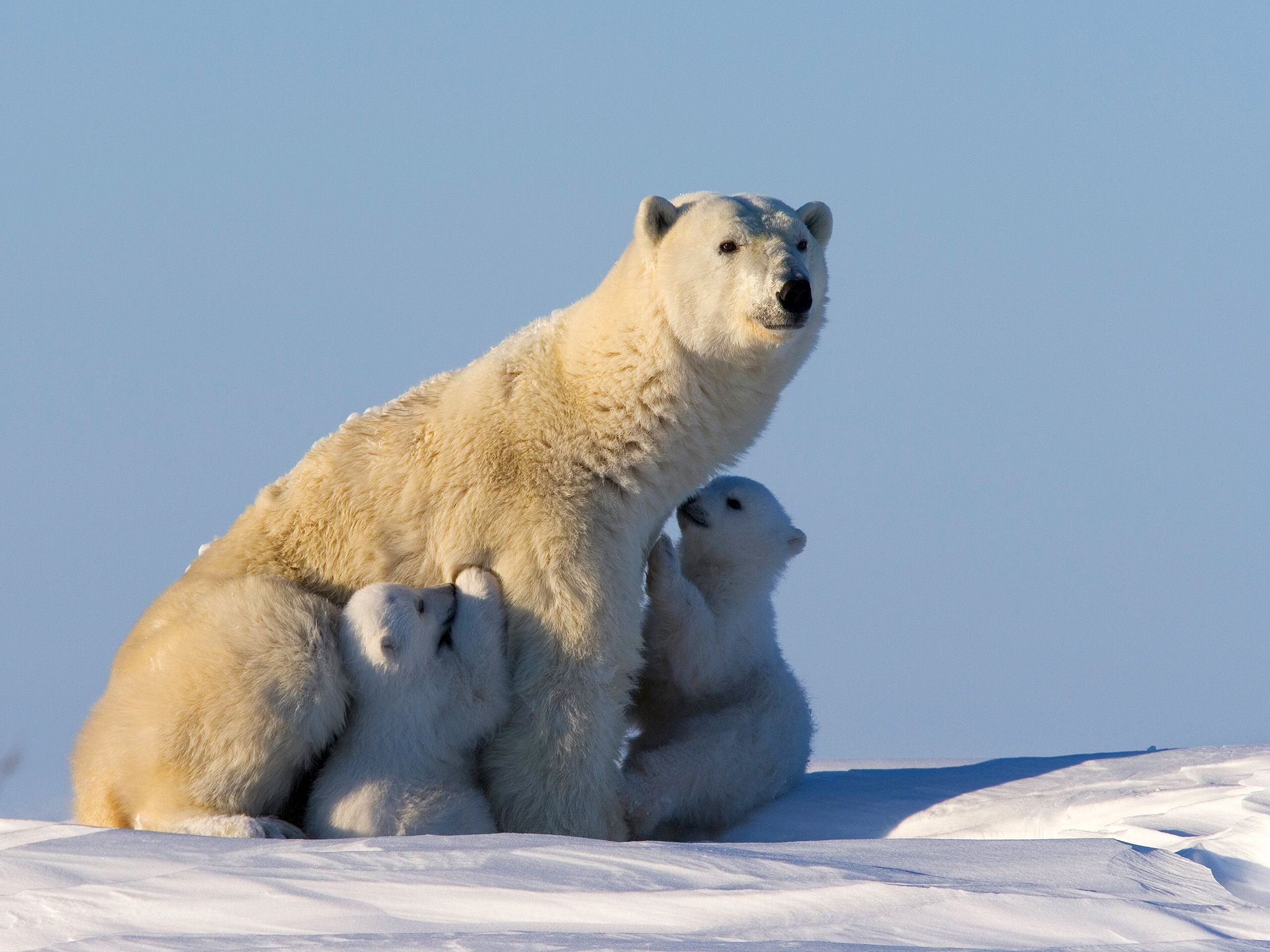 Photo Of The Day National Geographic Channel France Ours Blanc Animales Animaux