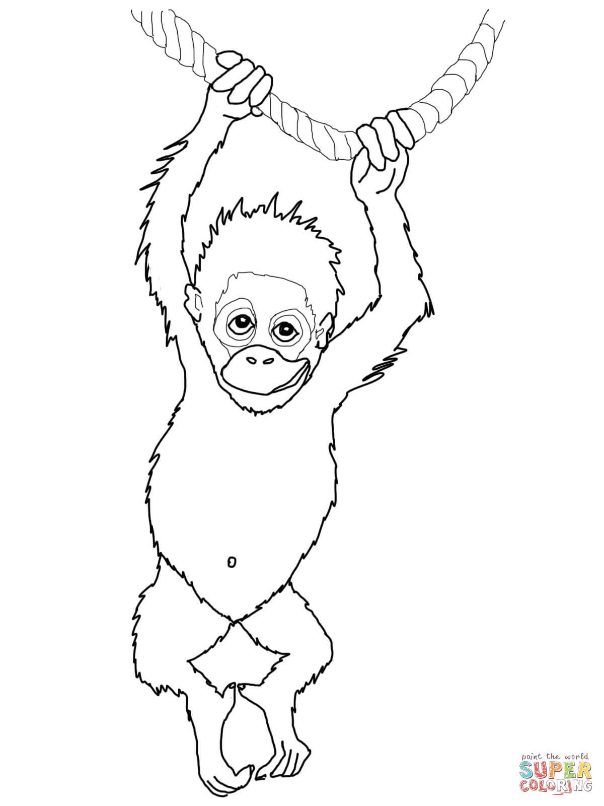 Baby Orangutan Coloring Page From Orangutans Category Select From