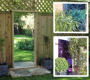 Buy Quality Outdoor Garden Mirrors At Primrose. Gothic, Gate, Weatherproof  Acrylic, Shuttered And Illusion Mirrors.