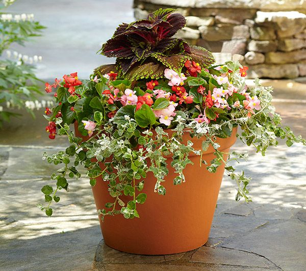Shade Loveru0027s ContainerThis Bright Container Adds Color And Texture To  Shady Yards And Patios. For