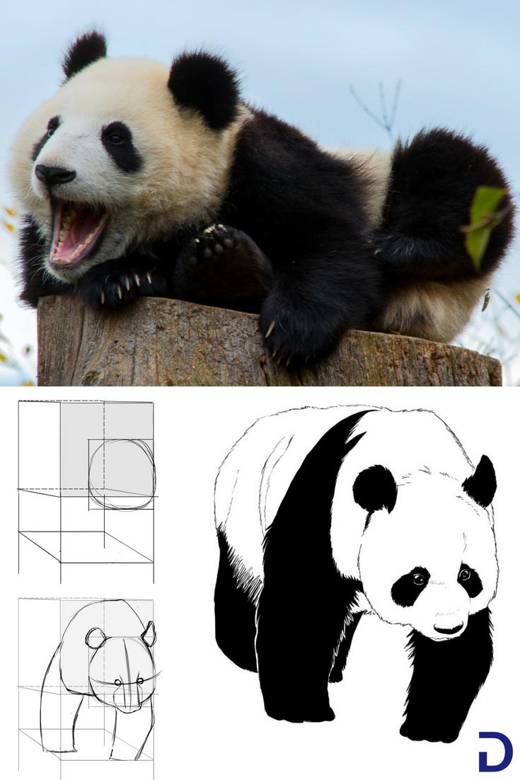 Comment Dessiner Un Panda Comment Dessiner Un Panda