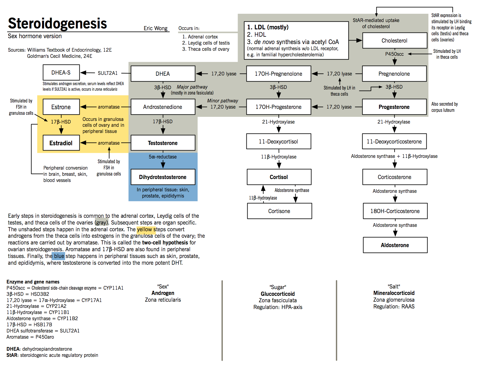Steroidogenesis sex hormone synthesis mcmaster pathophysiology steroidogenesis sex hormone synthesis mcmaster pathophysiology review pooptronica