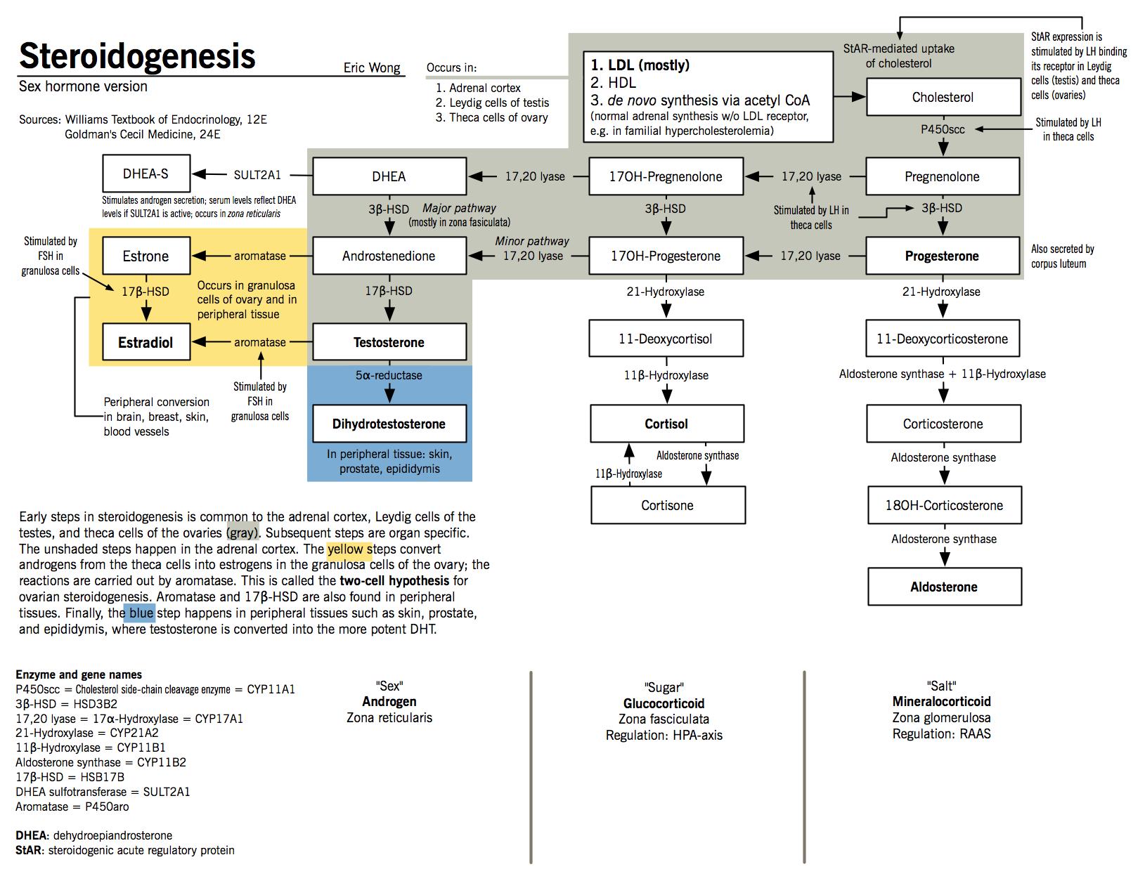 altered sex hormone metabolism symptoms in Bendigo