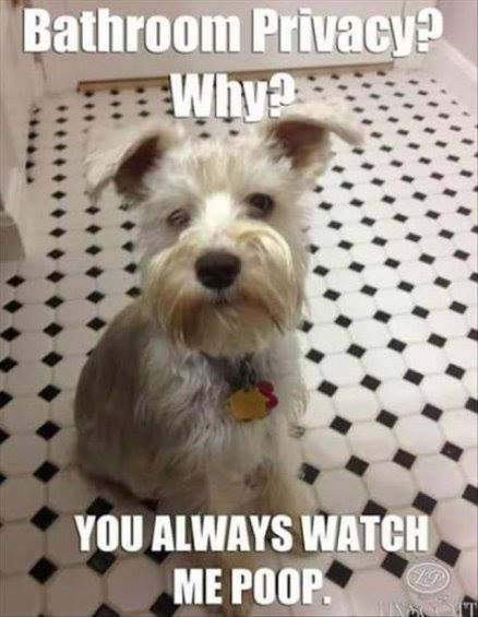 Bathroom Privacy Funny Memes Dog Meme Lol Funny Quotes Humor Funny Animals Funny Animal Pictures Funny Animals Funny Dog Pictures