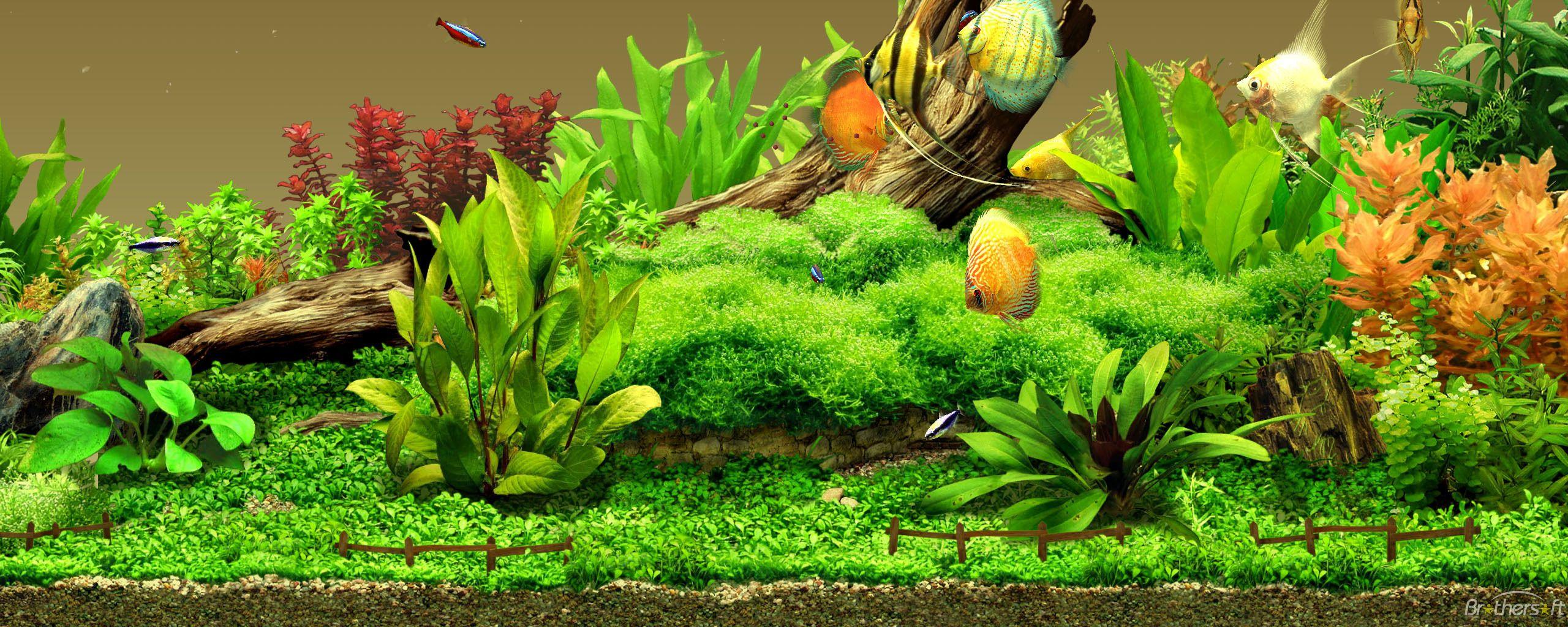 aquatic gardening | Aquarium live wallpaper, Aquarium ...