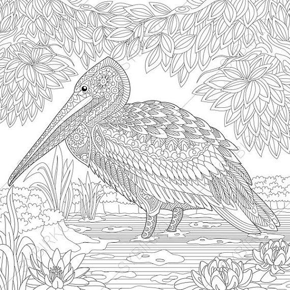 Pelican Bird Coloring Page Adult Coloring By