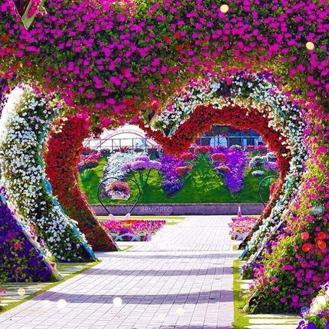 ✿⊱❥ Dubai Miracle Garden Dubai UAE Photography by @jhimgreg