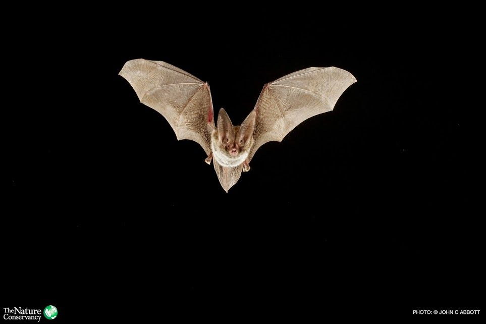 Who S The Scariest Of Them All Frankenstein And Dracula Have Nothing On Th Bat Animal Bat Facts Bat Facts For Kids