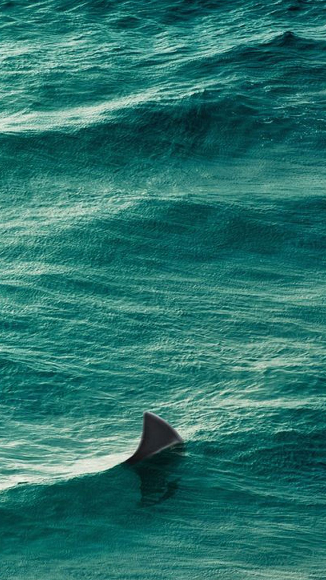 Shark's dorsal fin to the surface of the water Types of
