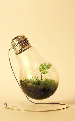 Bright Ideas For Incandescent Bulbs Trashy Wench The Queen Of Creative Reuse Light Bulb Terrarium Diy Greenhouse Light Bulb Art