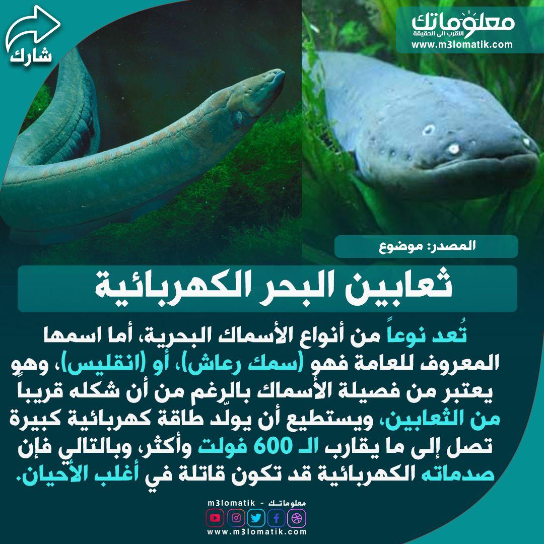 ثعابين البحر الكهربائية Fish Pet Fish Pets