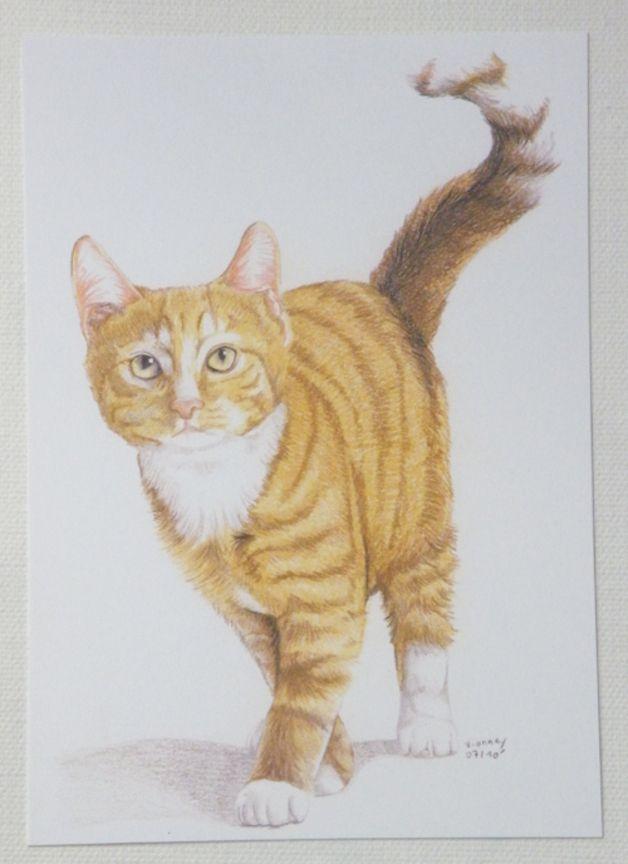 Carte postale - Chat roux