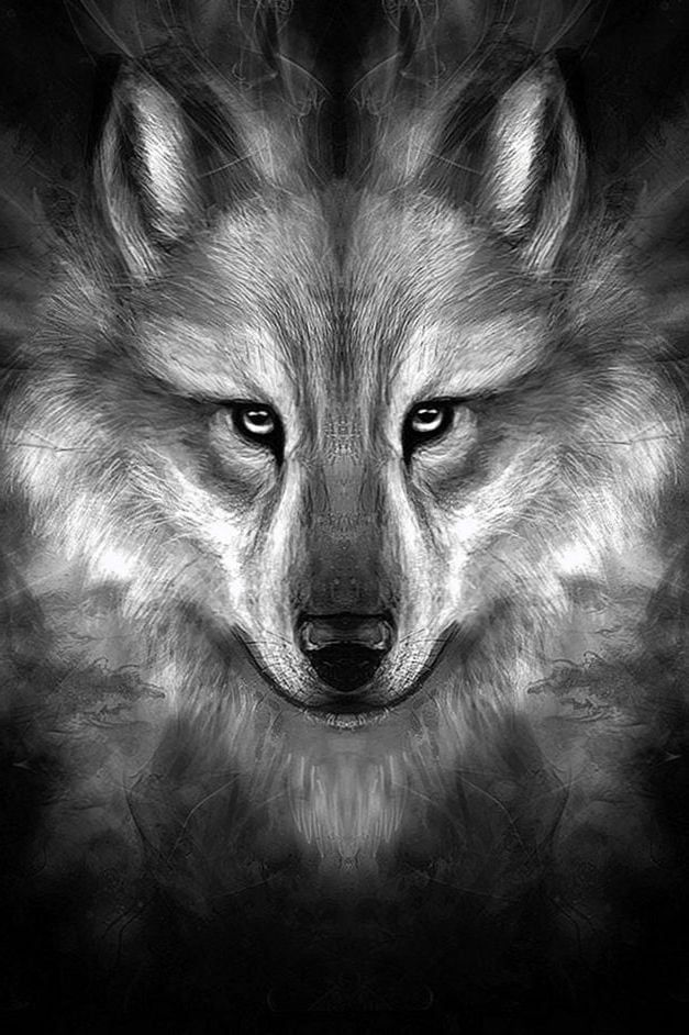 Black Wolf Face Wallpapers Hd Black Wolf Face Wallpapers Hd Wolf Face Wolf Wallpaper Wolf Background Wolf wallpaper iphone hd