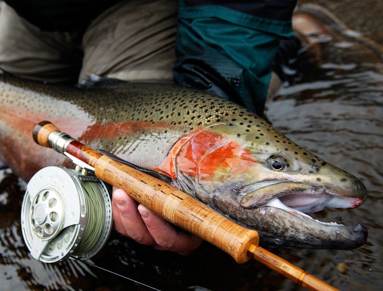 Carolinastyle Fish Trout Fishing Trout Fishing Gear