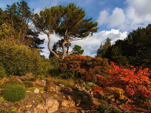 Japanise Corner at National Botanic Gardens, Dublin