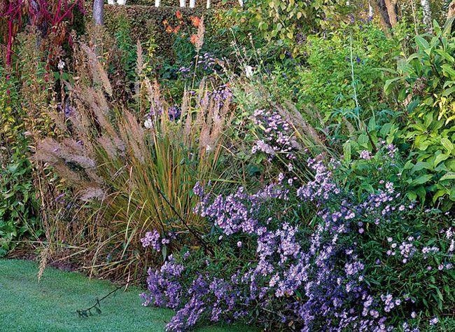 Les plantations de novembre au jardin, au balcon et à l
