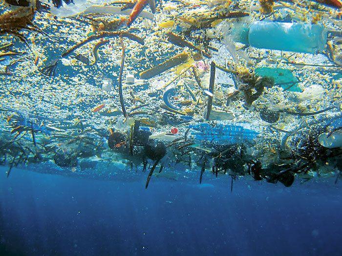 La cantidad de plástico que flota en los océanos ha aumentado 100 veces en los últimos 40 años y existen más de 600 especies cuya supervivencia está amenazada...
