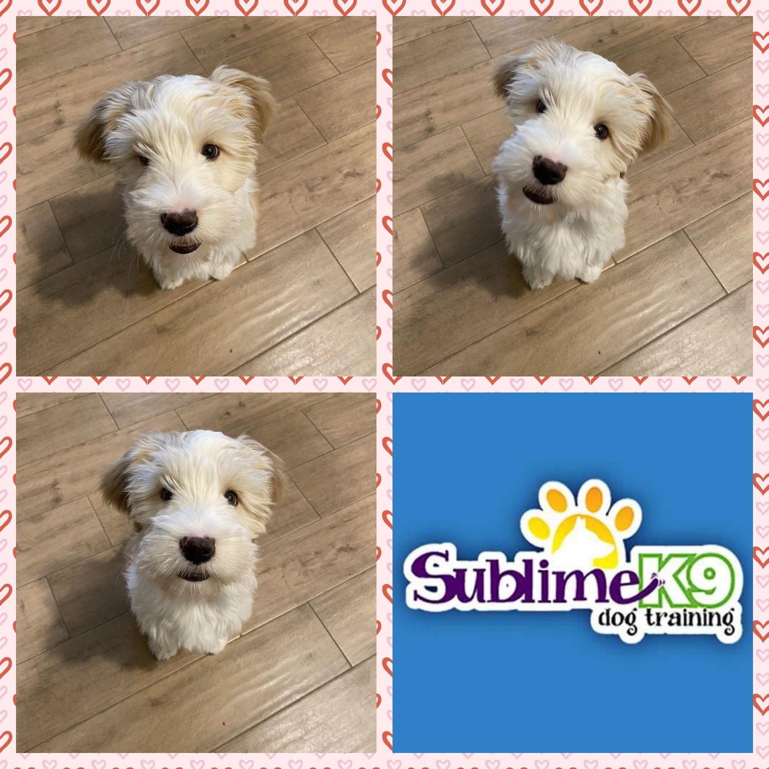 Long Island Dog Trainers Sublime K9 Puppy Trainer Therapy Dog