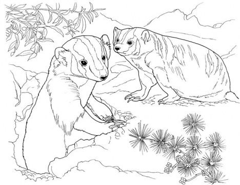 Badger In Garden Desert Animals Coloring Animal Coloring Pages