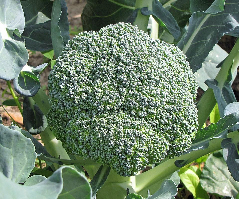 10 Creative Vegetable Garden Ideas: Gardening Tips, Vegetables, Vegetable