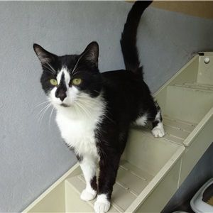 Adopt A Cat Woodside Animal Centre Rspca Leicester