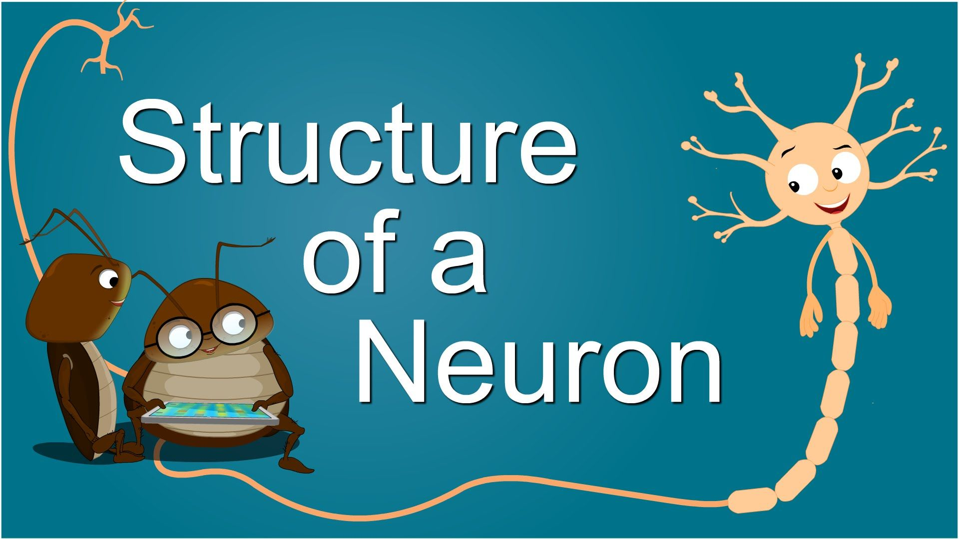 Structure of a Neuron   Neurons, Ap psychology, Human body ...