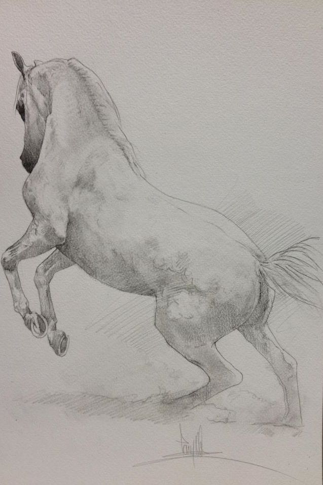 Horse drawing (cropped for Pinterest) Equine Artist Tony O\'Connor ...