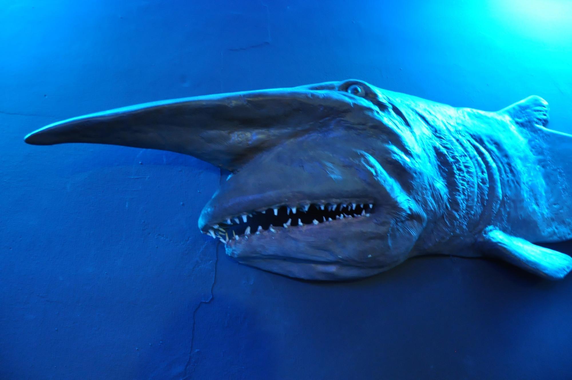 Genova aquarium in the city of Genova Italy is the biggest aquarium