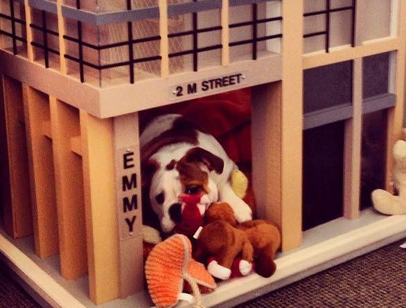Community Dog as Posh Building Amenity