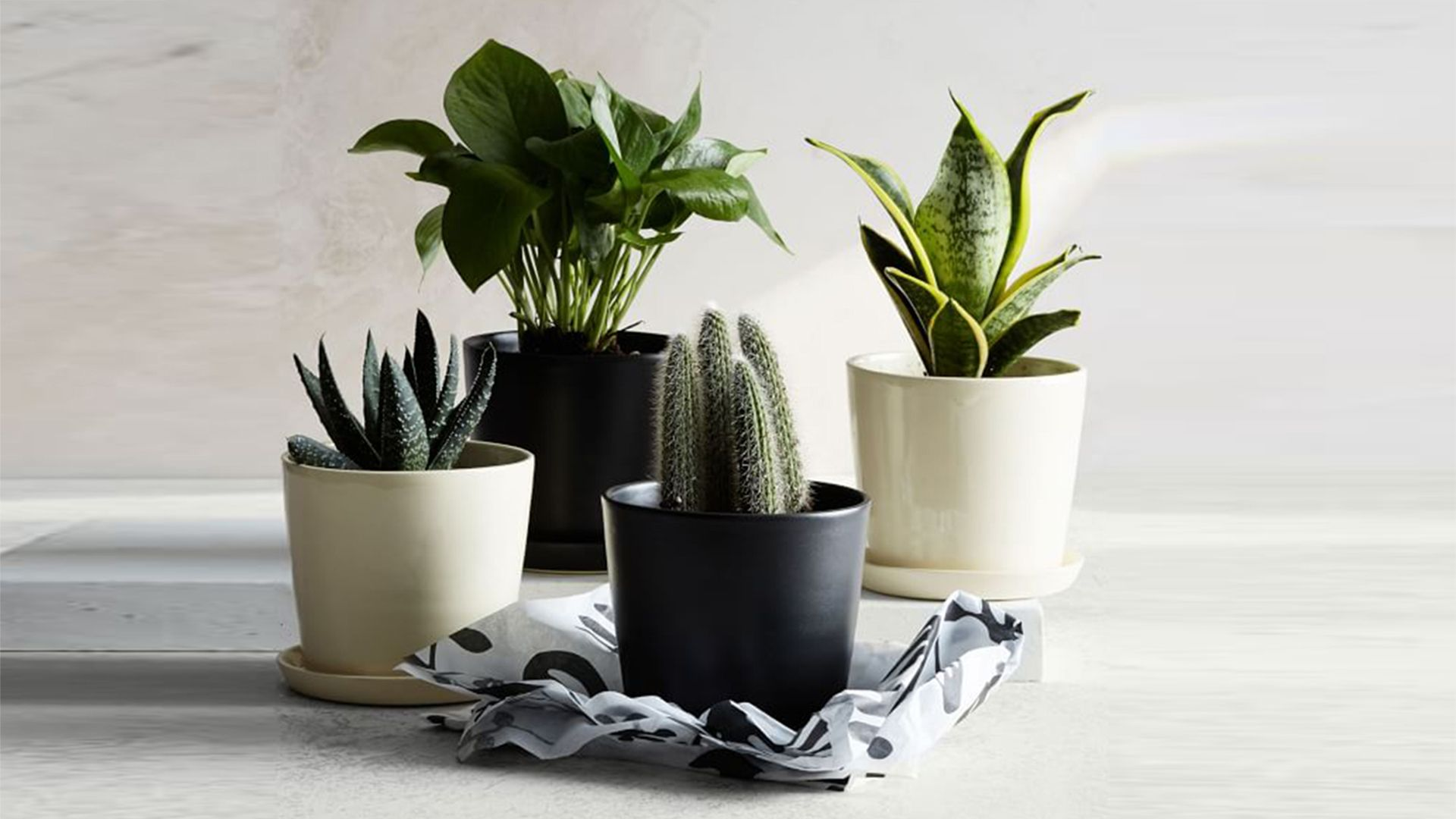 The 7 Best Places To Buy Planters For Your Home Plants And Flowers