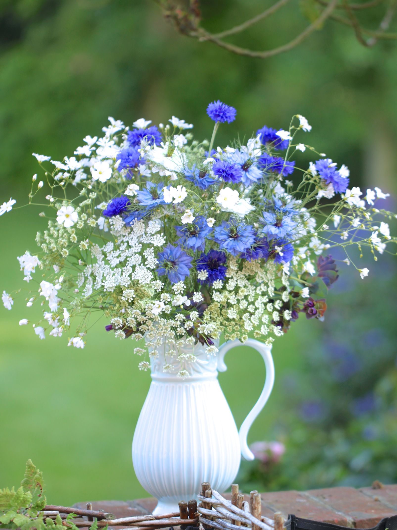 Hardy Annuals To Sow In September Flower garden plans