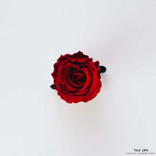 اجمل خلفيات ورود جميلة جدا صور خلفيات ورد طبيعيه 2021 Rose Flower Photos Rose Wallpaper Red Roses