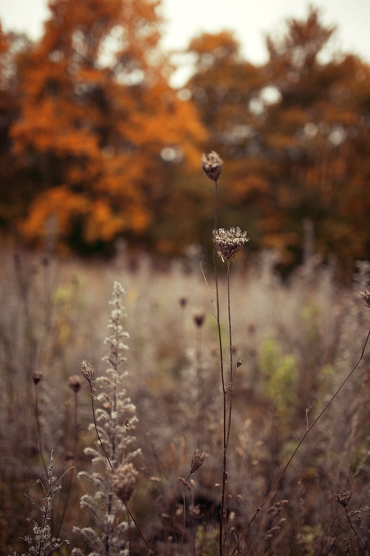 Warmes Herbst Outfit in braun - Kreative Fotografie Tipps und Foto Hacks