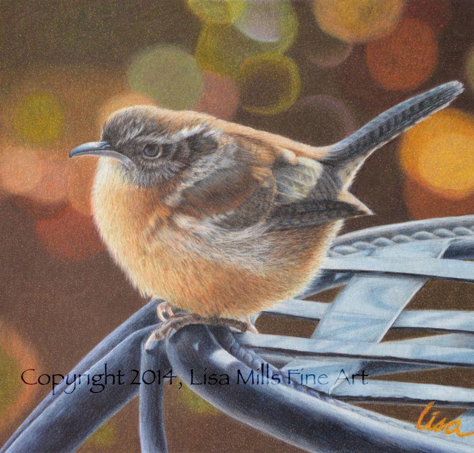 Carolina Wren Lisa Mills Color Pencil Art Color Pencil Drawing Bird Art