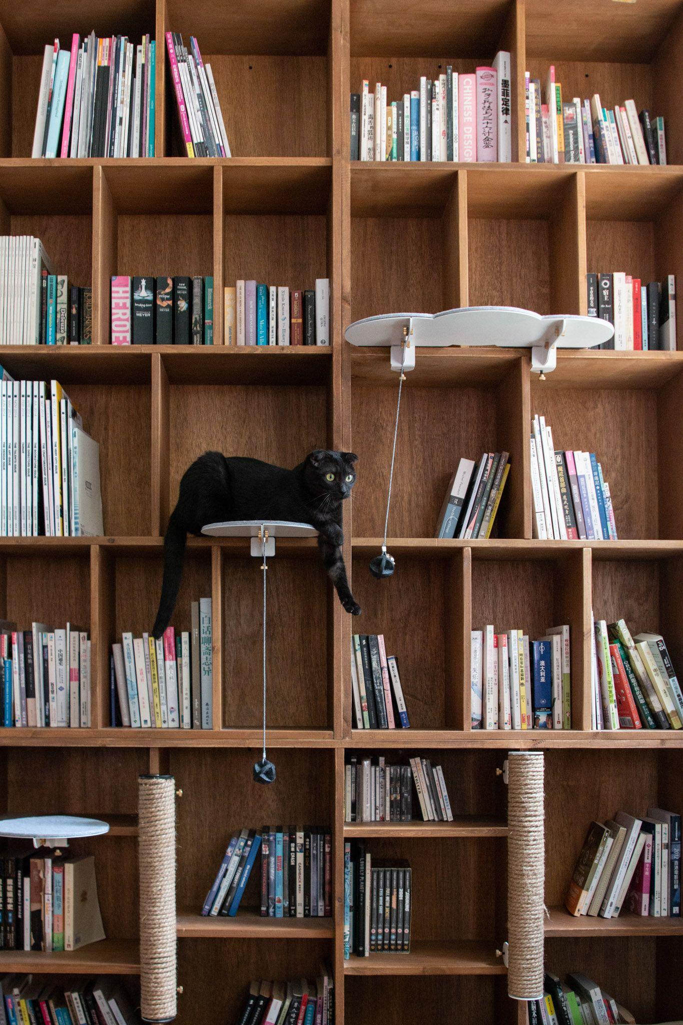CATSSUP Cat furniture, Cat room, Cat lounge