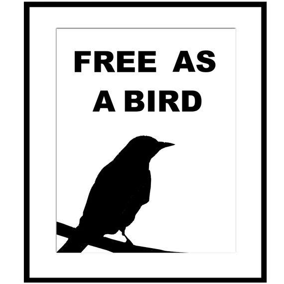 Free as a Bird  8 x 10 Black and White Print  Bird by Tessyla, $20.00
