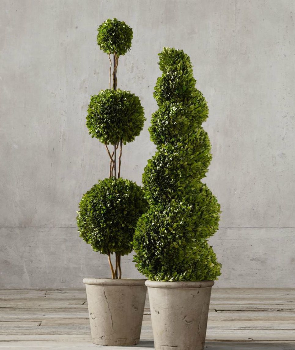 Topiary Style A Dash Of Manicured Charm Preserved Boxwood Topiary Outdoor Topiary Boxwood Topiary