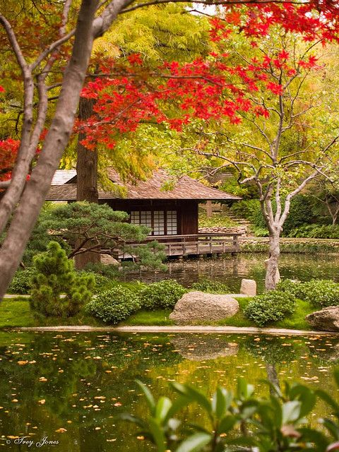 Japanese Tea House In Fall, Fort Worth Botanic Garden