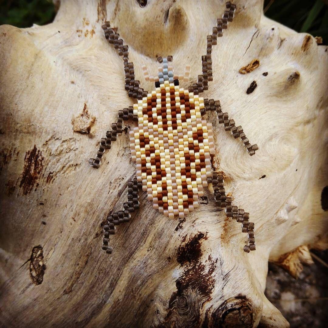 c745816e430de418f264e43b06619b6e et voilà goliath ! un bel insecte qui a l'état naturel mesure tout