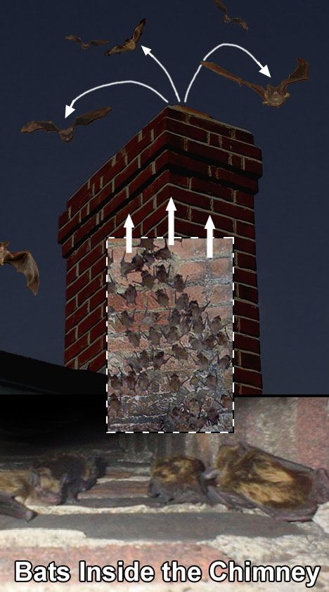 You Have Two Ways Of Getting Bats Out Of The Chimney Through The