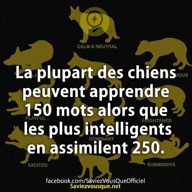 La plupart des chiens peuvent apprendre 150 mots alors que les plus intelligents en assimilent 250.