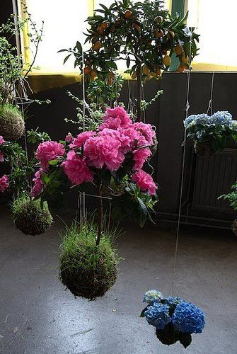 FV: And of course the Japanese have been doing this for thousands of years. It was a bit de-motivating when I found out about kokedama, but like I said if you think about it, it's not that difficult or groundbreaking.