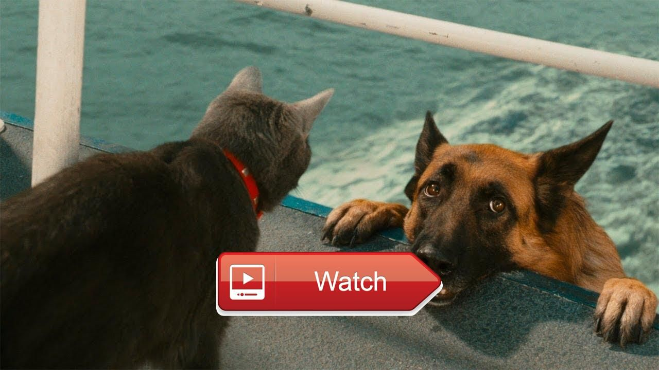 Funny Videos Funny Cats And Dogs