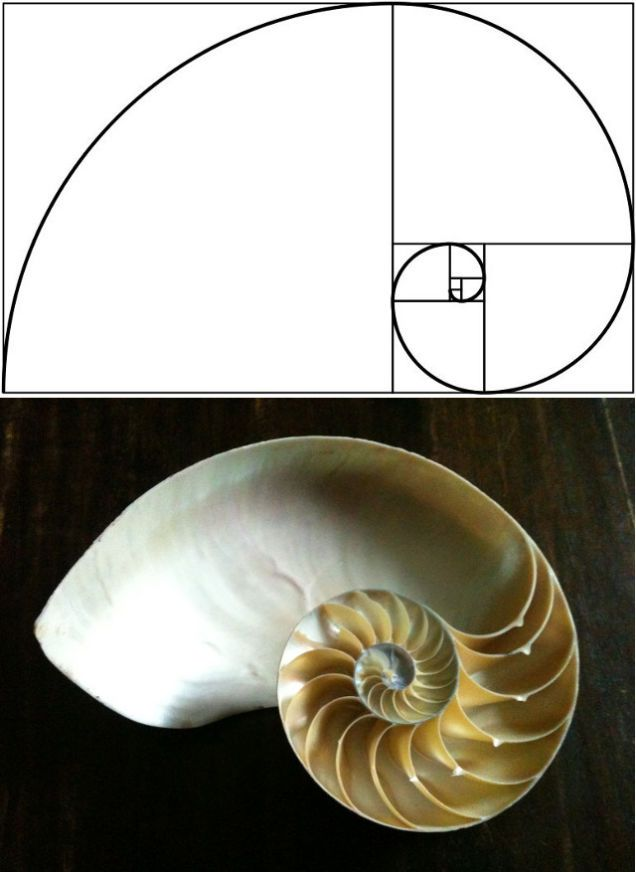 15 Uncanny Examples Of The Golden Ratio In Nature Fibonacci