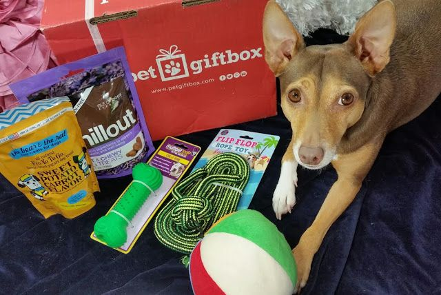 Bits And Boxes Petgiftbox Small Dog Box Review July 2016 Plus 50 Coupon Petgiftbox Dogs Subscript Small Dogs Dogs Box