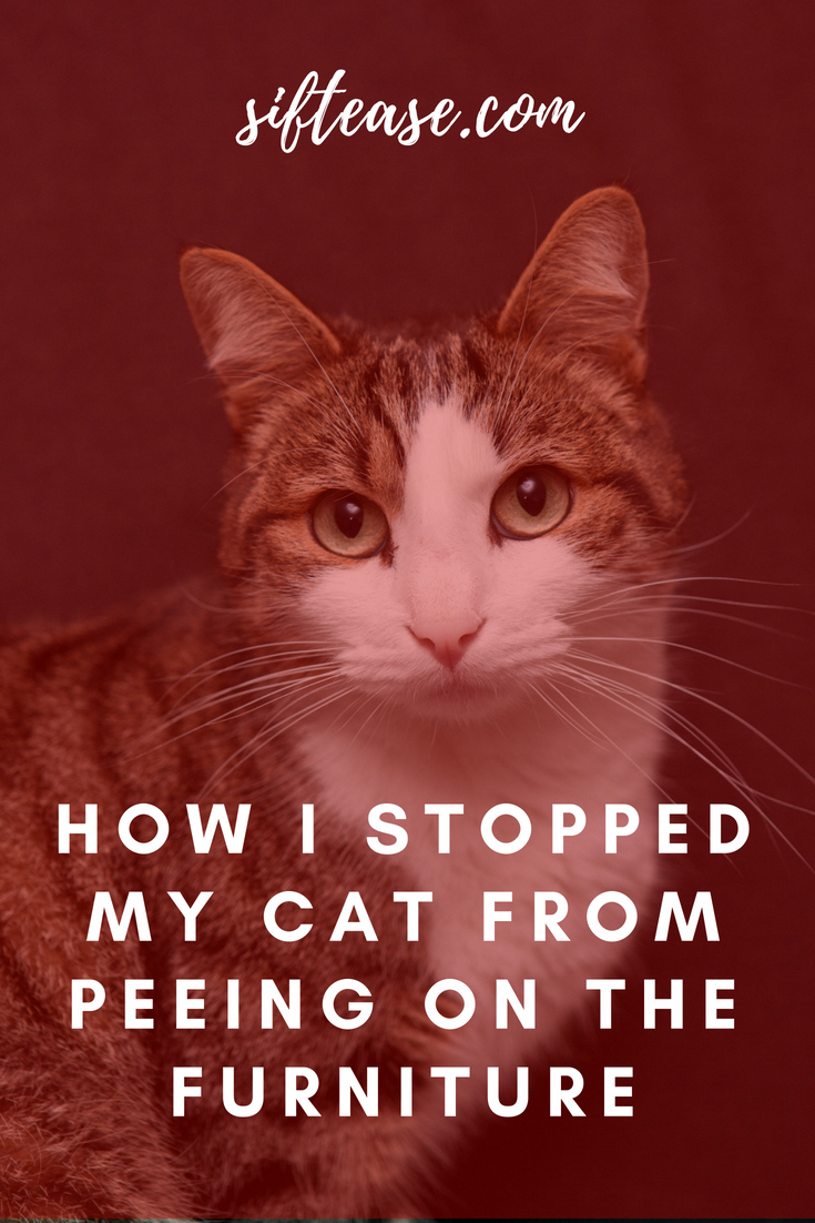Some Tips, Tricks, And Methods For That Perfect cat